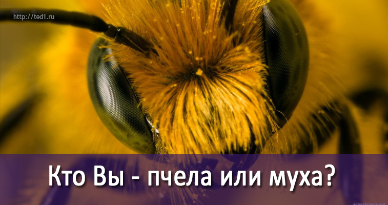 bee-or-ant